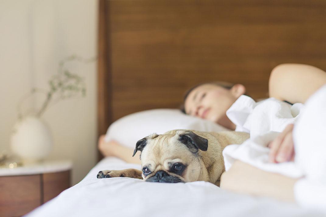 Cotone … ma quale cotone scegliere per il nostro letto  – Biancocasa ... ba47dd79a7b